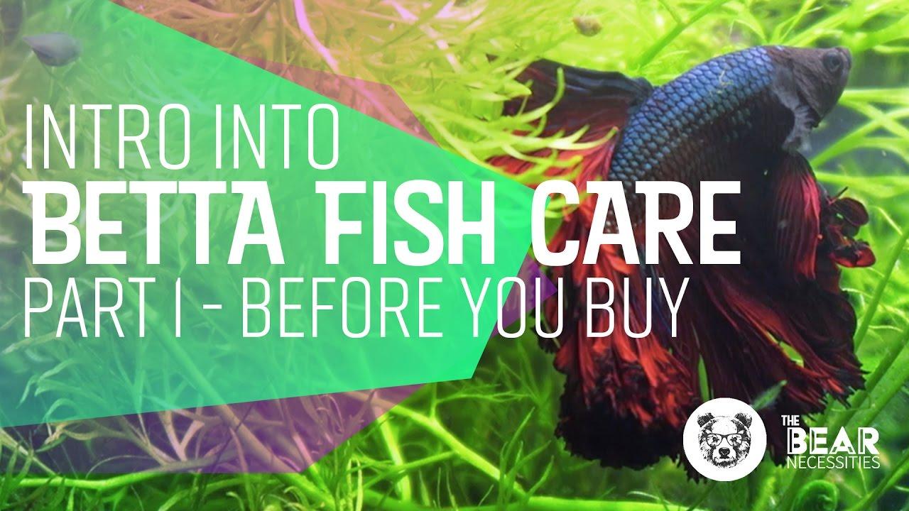 Intro into Betta Fish Care   ?  Bear Necessities
