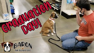 Boxer Dog Puppy Training GRADUATION DAY at Petsmart
