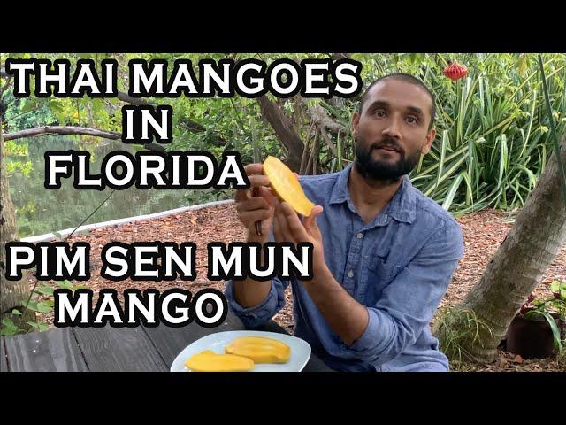 MANGOES FROM AROUND THE WORLD: Pim Sen Mun Mango Tasting