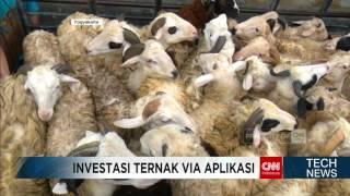 Investasi Ternak Domba dan Lele via Aplikasi Smartphone