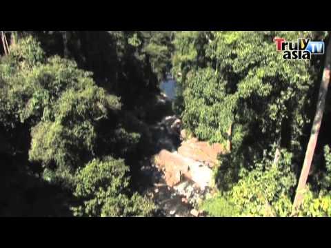 Malaysia Travelogue: Sedim Tree Top Walk, Kedah