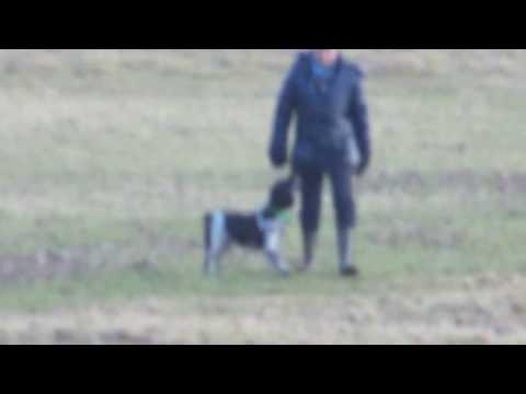How to stop a dog from chasing sheep using professional dog training
