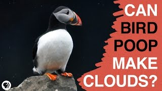 Can Bird Poop Make Clouds?