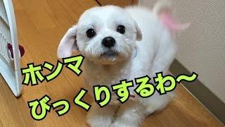 チャンネル登録よろしくお願いします!! https://www.youtube.com/chan...