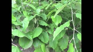 Кандидоз. Лечение кандидоза. Часть 9. Питание при кандидозе. Лекарственные растения.