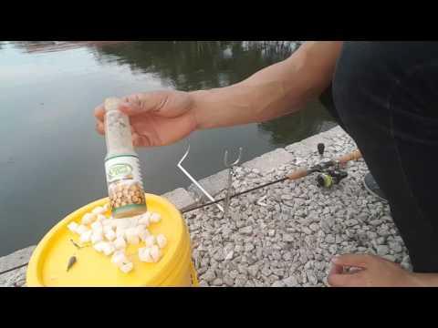 Pancing ikan di Kolam pancing 123 Batu Arang (Rawang)