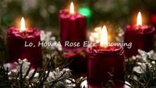 Lo, How a Rose E