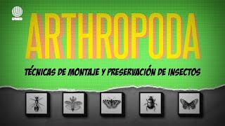 ARTHROPODA Capítulo 3, Técnicas de montaje y preservación de insectos