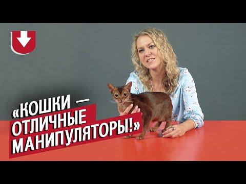 Заводчики кошек (КОНКУРС ВНУТРИ) | Неудобные вопросы