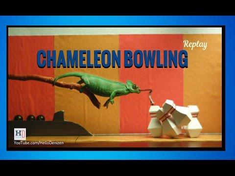 Chameleon Bowling (Animal Arcade)