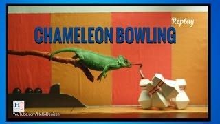 Chameleon Bowling