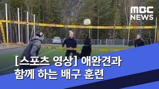 [스포츠 영상] 애완견과 함께 하는 배구 훈련 (202…
