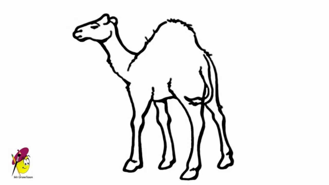 Camel Lord Of Desert How To Draw A Camel Youtube