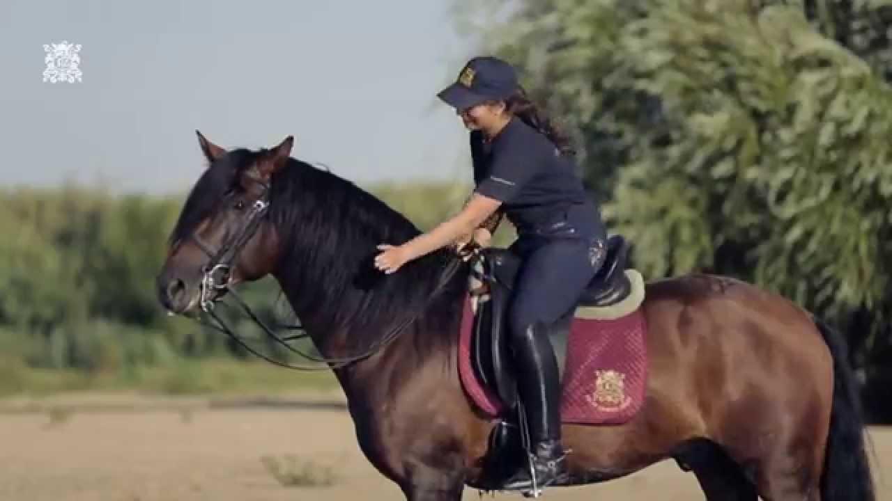 SOLAR ESPIRITO SANTO HORSE RIDING HOLIDAYS - YouTube