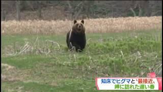 【MIKIOジャーナル】ヒグマが私に向かって走ってきた!