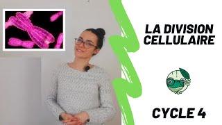 La division cellulaire - 3ème - Madame SVT