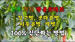 고추 청고병 가지 오이 감자 배추 방울 토마토 국화 장…