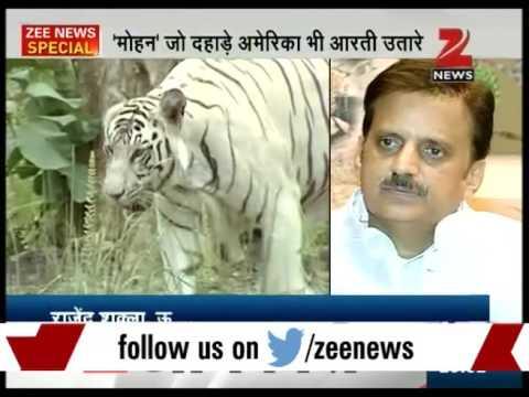 Return of White tigers in Rewa
