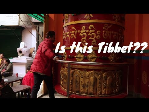 Found this small country in Delhi 😍 | mini Tibet in Delhi