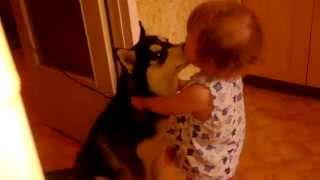 Хаски Чика и ребенок