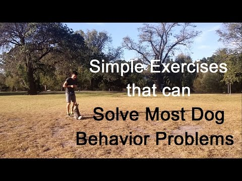 Simple Exercises that can Solve Most Dog Behavior Problems