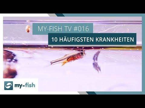 Die 10 häufigsten Krankheiten im Aquarium | my-fish TV