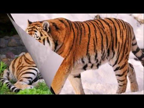Животные красной книги   Фото и описание животных