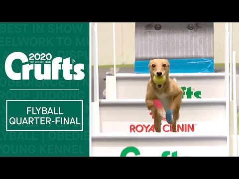 Flyball - Quarter Finals  - Part one | Crufts 2020
