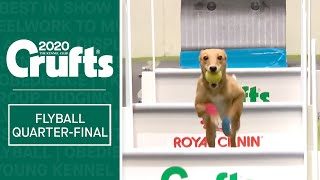 Flyball  Quarter Finals   Part one | Crufts 2020