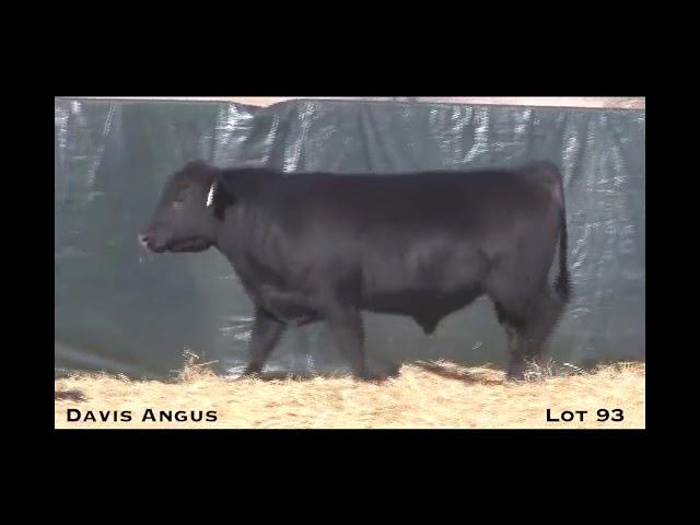 Davis Angus Lot 93
