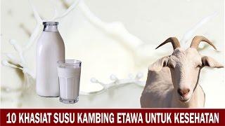 10 Khasiat Susu Kambing Etawa untuk Kesehatan