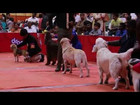 HYCAN PET'S SHOW 2016 HYDERABAD