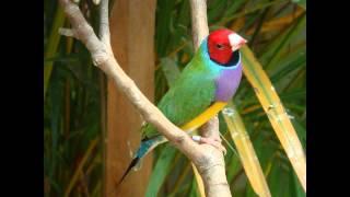 10 Burung tercantik di dunia