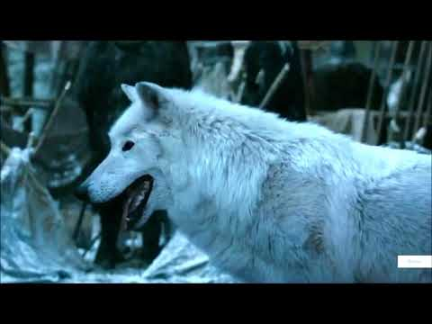 Jon and Ghost (Direwolf) -  Game of Thrones