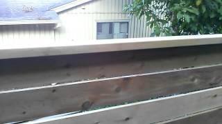 Japanese Style Cedar Fence Tour