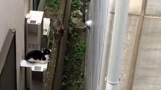 我が家の下でネコがいつもケンカしているネコたちのことを見ていたら…。