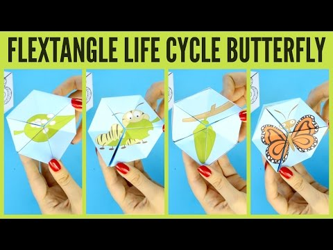 graphic relating to Flextangle Printable referred to as Butterfly Daily life Cycle Paper Toy Template - flextangle