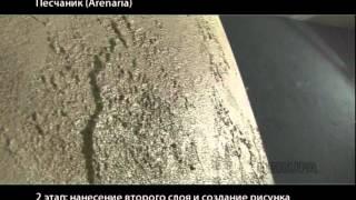 видео Аренария (песчанка)  - выращивание из семян, посадка и уход в открытом грунте