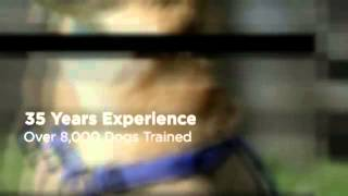 Private Dog Training Oceanside Ca Dog Trainers