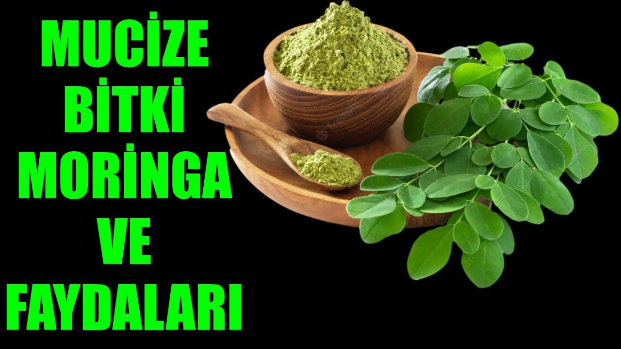 Moringa Çayı Nedir Moringa Çayı Kullananlar