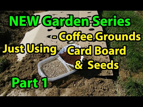 Coffee Grounds, Cardboard & Seeds - No Till Vegetables Gardening Series for Beginners -  101 Pt 1