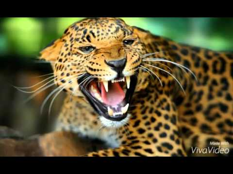 pictures of jaguars and jaguar cubs youtube