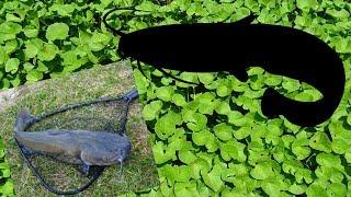 Супер уловистые монтажи для ловли сома