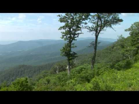 Jewell Hollow Overlook Skyline Drive Shenandoah National Park