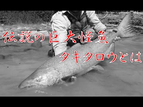 伝説の巨大魚「タキタロウ」につ...