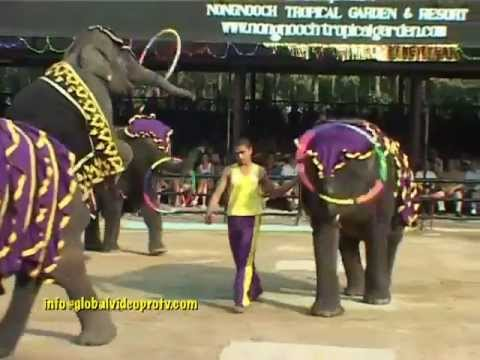 ELEPHANTS GOT TALENT, PERFORM & PAINTING, PATTAYA, THAILAND