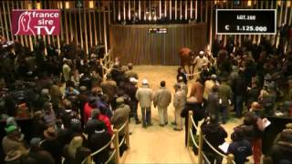 Top Price des ventes d'élevage Arqana - Lot 160 - F. pleine de Galileo