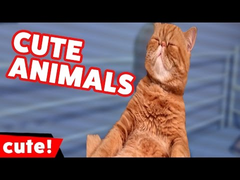 Funniest Cute Pet & Animal Tricks & Moments Weekly Compilation 2016 | Kyoot Animals