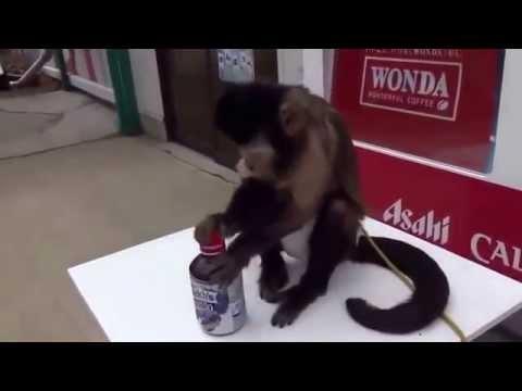Шустрая обезьянка!
