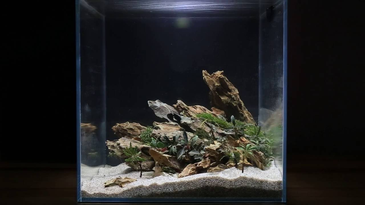 How To Aquascape A 7g Cube Lost World Youtube